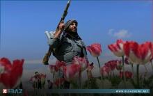 إيران تدعو أوروبا إلى دفع تكاليف مكافحة ترانزيت المخدرات القادمة من أفغانستان
